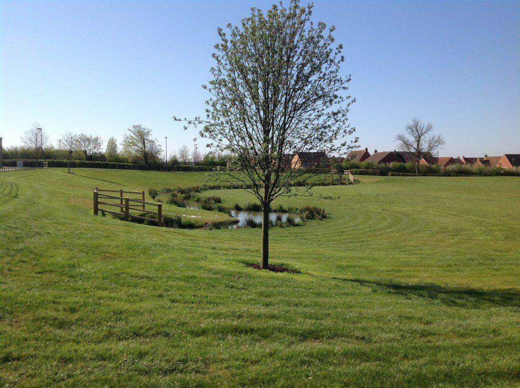 Tadpole green space