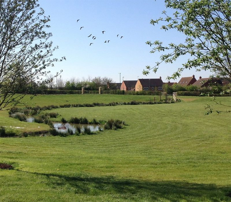 A view of the meadow which is part of Tadpole Garden Village